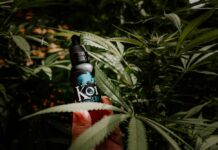Koi CBD vape juice bottle held amongst hemp leaves