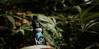 Koi CBD vape juice bottle held amongst hemp leaves