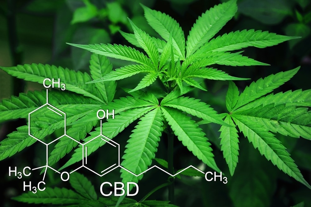 Chemical structure of CBD in front of Hemp plants