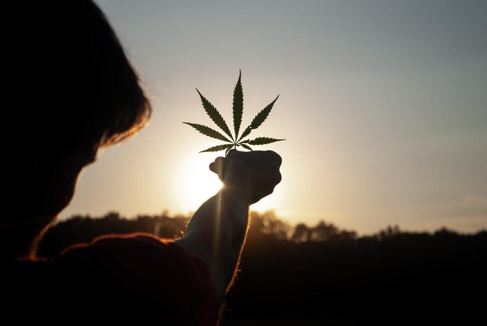 Cannabis leaf held up against a sunrise